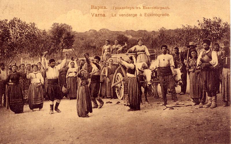 Начало на гроздобера, фотогр. Атанас Велчев